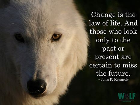 Wolf Den Shared Wolf Conservation Center Photo