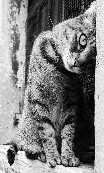 Belle photo noir et blanc