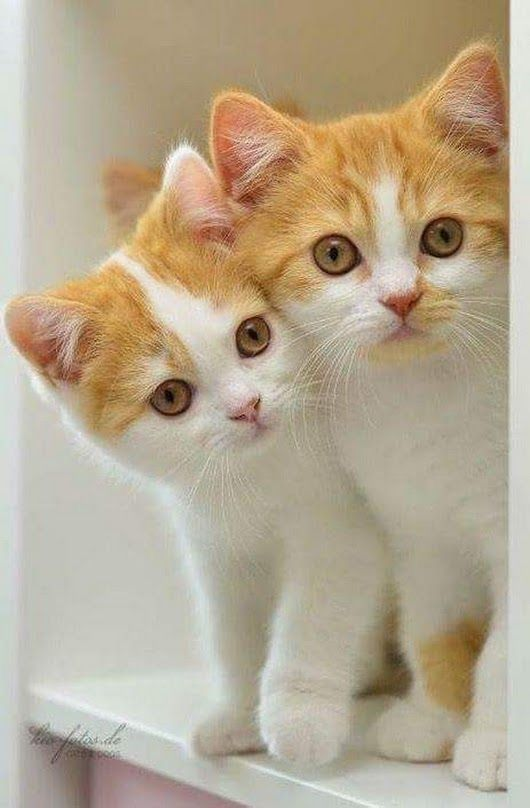 Pin By Dougmark Productions On Cats Are Awesome Cats Kittens