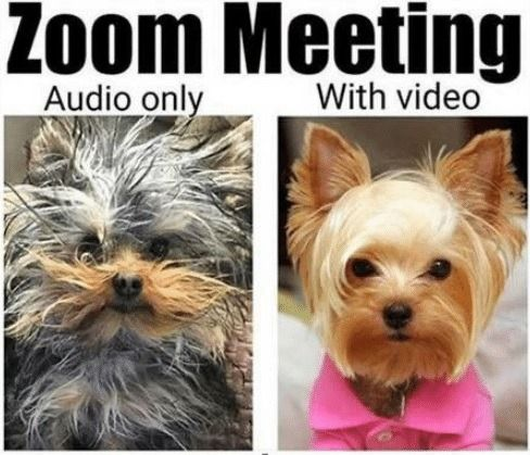 Zoom Meeting Best Funny Pictures Funny Pictures Meeting Memes