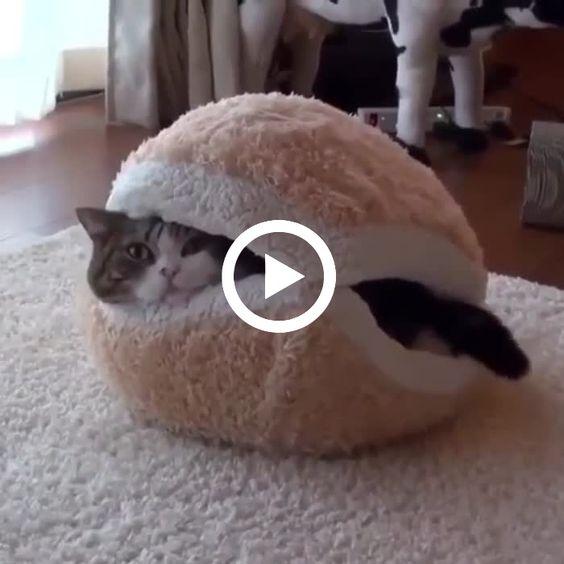 Os gatos ficaram loucos por causa do brinquedo