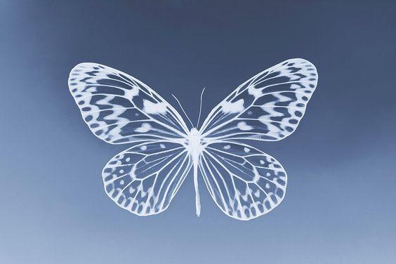 Blue Butterfly by Hannah Opal Setford, nature, photography, photogram, negative
