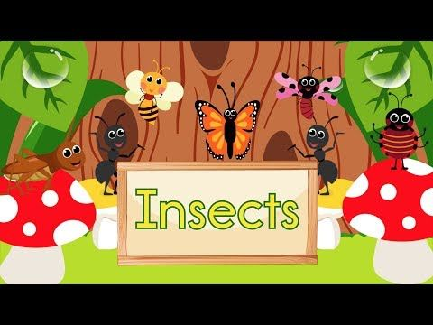 8 Insect Song Animated Youtube Insect Activities Letter I Activities Preschool Planning
