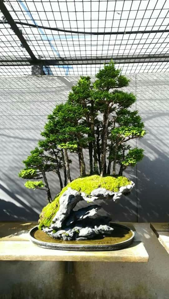 Amazing Bonsai Forest On The Stone Indoor Bonsai Tree Bonsai Forest Indoor Bonsai