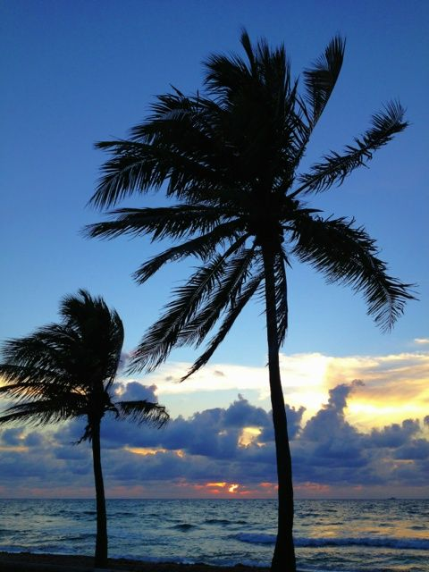 Trees at the beach, close to sunrise