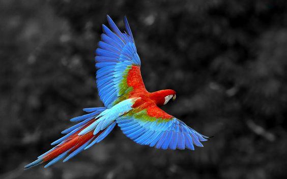 Colored Ara Bird 1920×1200