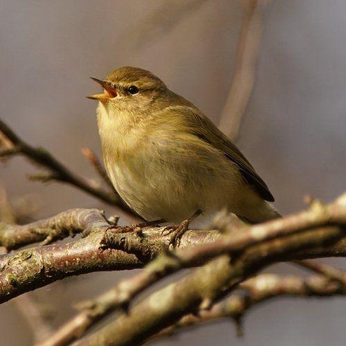 Vogelsoorten Lees Alles Over De Tuinvogels In Nederland Tip In 2021 Vogels Natuur Nederland