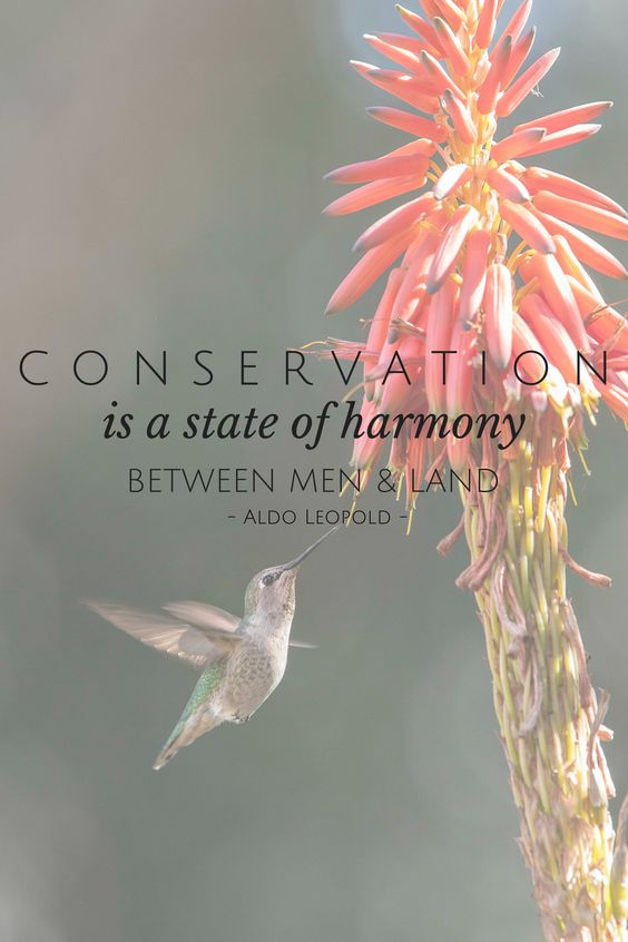 #conservation #quotes