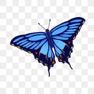 Butterfly Png Vector Psd And Clipart With Transparent Background For Free Download Pngtree In 2020 Butterfly Illustration Butterfly Clip Art Blue Butterfly