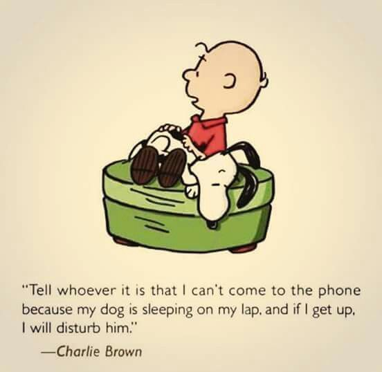 Dog Quote Charlie Brown Snoopy Love Charlie Brown
