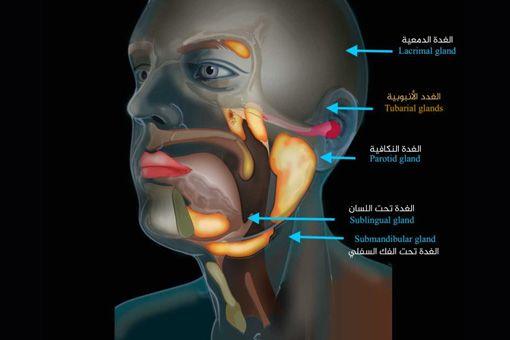 مفاجأة اكتشاف عضو جديد في جسم الإنسان ما هو وأين يوجد وما وظيفته Https Wp Me Pbwkda Paa اخبار السودان الان من كل المصادر Sudan Sudanese Africa E