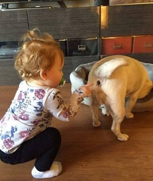 犬のお尻と赤ちゃん