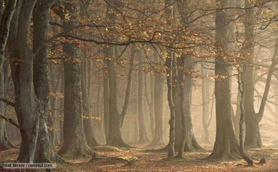 Challenges of Ecological Restoration: Lessons from Forests in ...