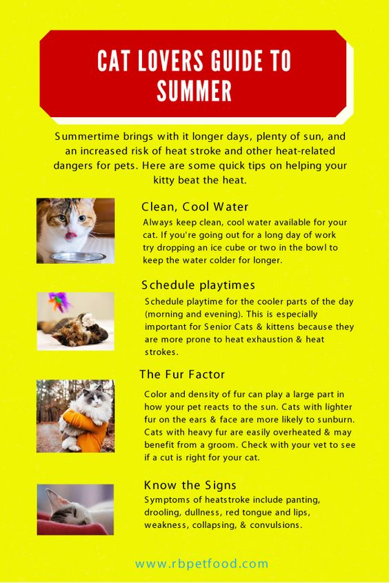 Red Bandanna Pet Food: The Cat Lovers Guide To Summer Safety
