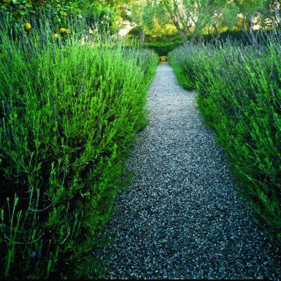 lavender-edged gravel path