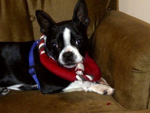 Like my scarf?