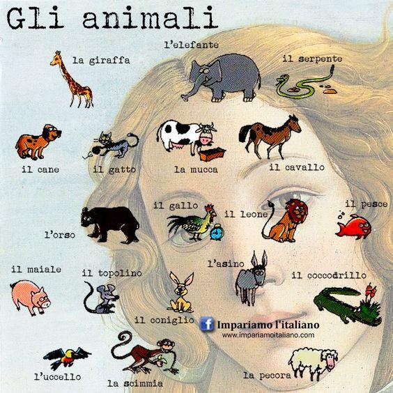 Il vocabolario degli animali Perfeziona il tuo italiano su www.impariamoitaliano.com