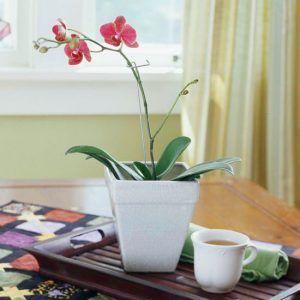 Orhideje postavite uz istočni prozor