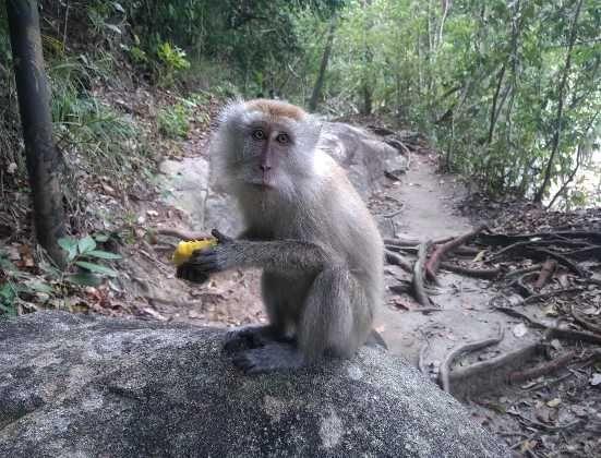 Taman Negara Pulau Pinang Tempat Menarik Di Penang Taman Negara Penang Penang Island