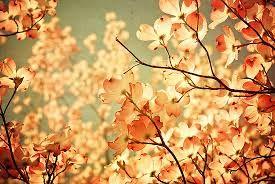 vintage flowers tumblr - Pesquisa Google