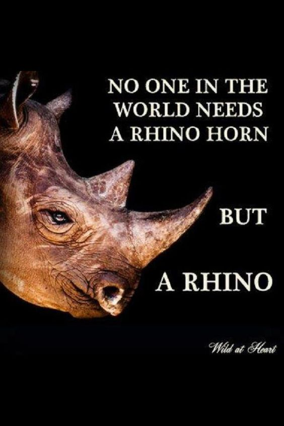 No one in the world needs a rhino horn but a rhino. #poaching #rhinos #conservation JAMSO loves Rhinos. We are goal setting and KPI experts. To find out more follow on twitter @jamsovaluesmart or online http://www.jamsovaluesmarter.com
