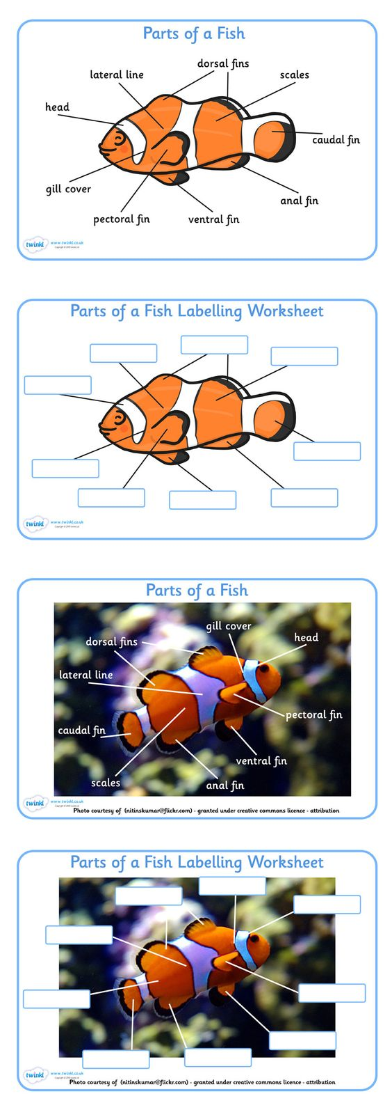 Parts of a Fish Labelling Sheets - Pop over to our site at www.twinkl.co.uk and check out our lovely Under the Sea primary teaching resources! under the sea,  fish labelling sheet, #UnderTheSea #UnderTheSea_Resources