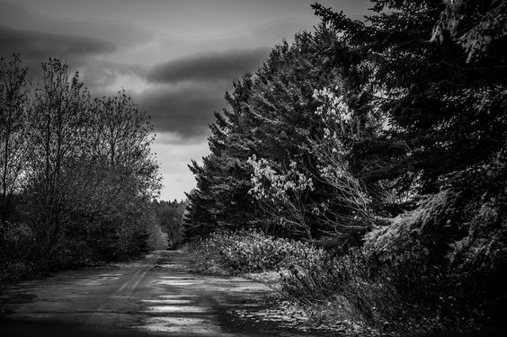 Paysage of an abandoned road in black and white in Saint-Quentin, New-Brunswick, Canada