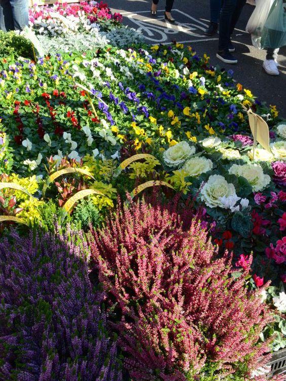 Sunday stroll through Columbia Road FlowerMarket, London