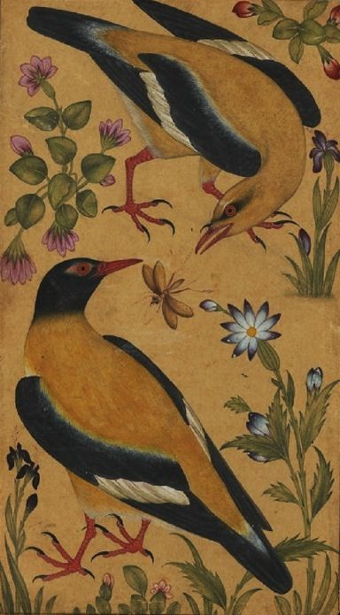 thehollowsquare:  two orioles.   india, 1610: