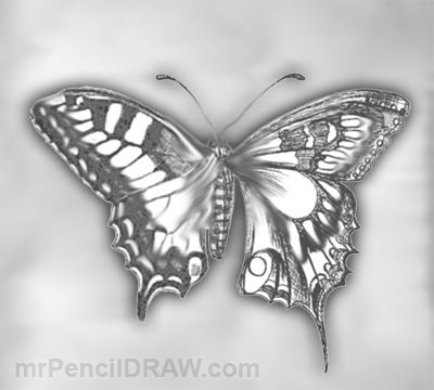 Beautiful cool pencil drawings and butterflies on pinterest for Cool drawings of butterflies