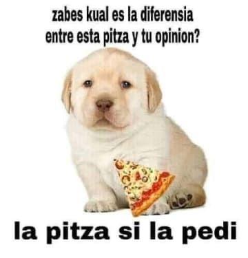 25 Memes Del Perrito Tierno Que Son Efectivamente Muy Tiernos Memes Perros Memes Divertidos Memes