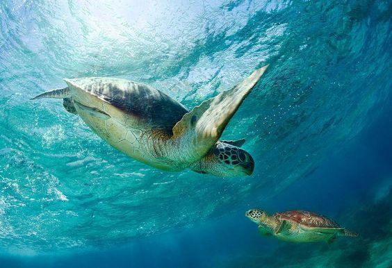 Beautiful Photo of Sea Turtles