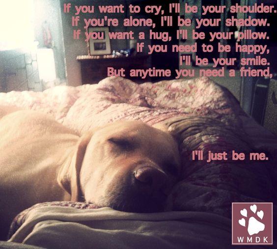 dog knows best