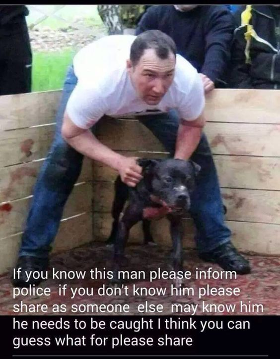 Speak up Speak out! Against dog fighting