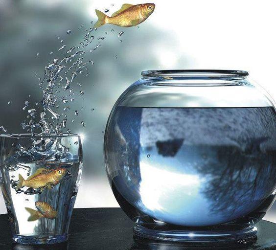 Um peixe fora d'água... rs
