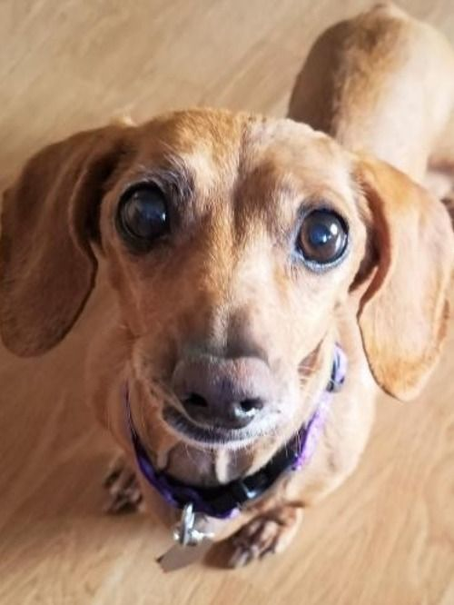 Get Your Search Started For A Small Dog Now On Adopt A Pet Com