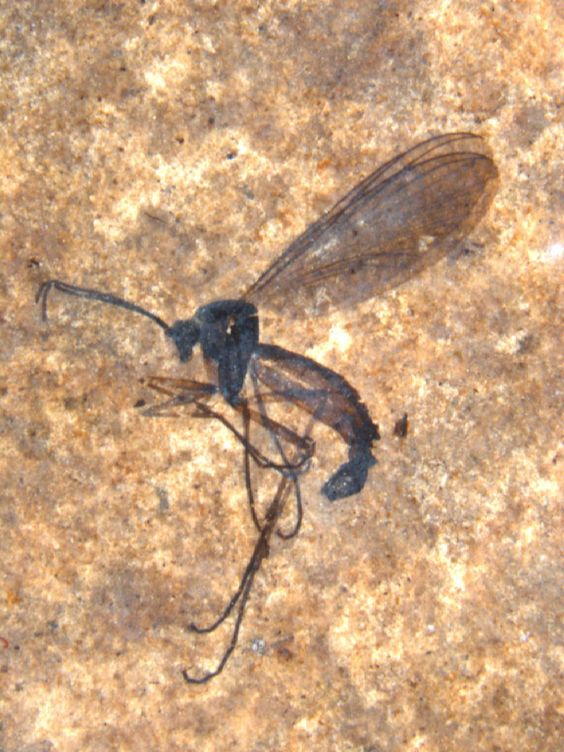 Locked in Stone: A Gallery of Fossilized Insects. Paleontólogo S. Bruce Archibald at Fossil McAbee site no Canadá, um dos muitos pontos em British Columbia que preserva insetos minúsculos fossilizados em detalhes impressionantes.