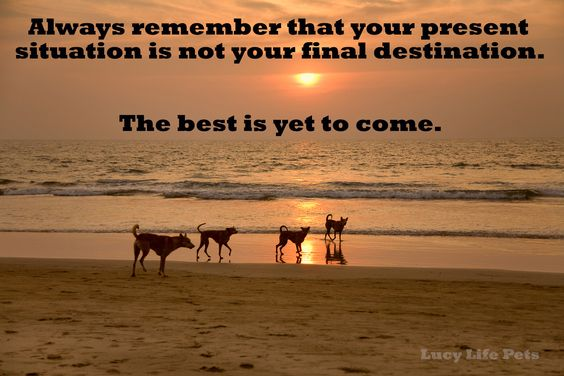 Always Remember That Your Present Situation Is Not Your Final
