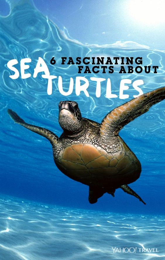 6 Amazing Facts You Never Knew About Sea Turtles