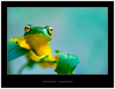 Green/yellow frog