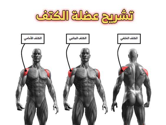 تشريح عضلة الكتف Shoulder Workout Exercise Shoulder