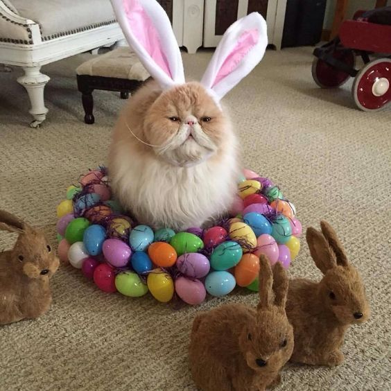 15 Cute Cats That Are Super Ready For Easter