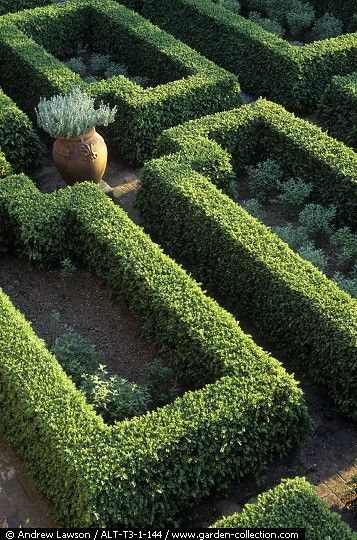 Gardens maze and flower on pinterest for Garden maze designs