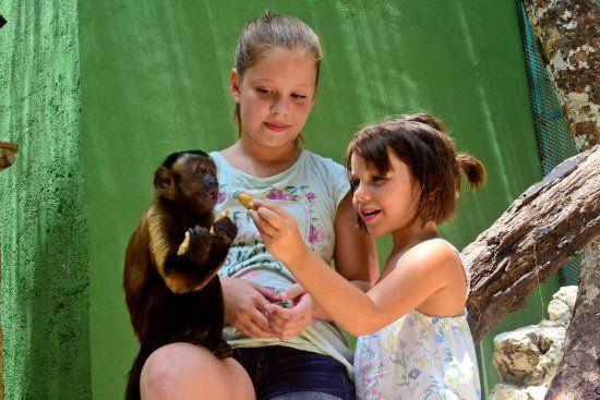 Akumal Monkey Sanctuary, $40 pp Adults.  $35 for photo CD