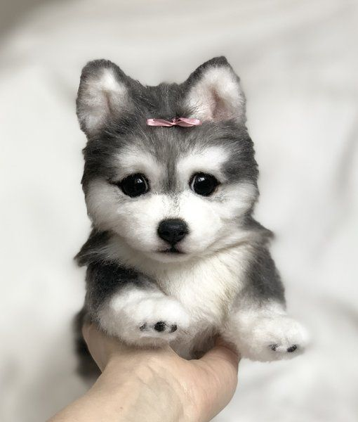 Puppy Pomsky Uki By Yuliya Zubareva Puppies Pets Training Your Dog