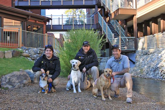 Meet our Operations Staff's puppies - Ashton, Brodie and Maya. Aren't these #dogs of #Breckenridge the cutest!!