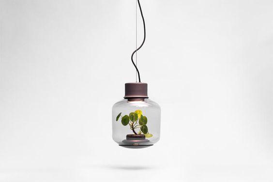 These Lamp-Lit Terrariums Thrive In Dark, Windowless Apartments | Co.Design | business + design