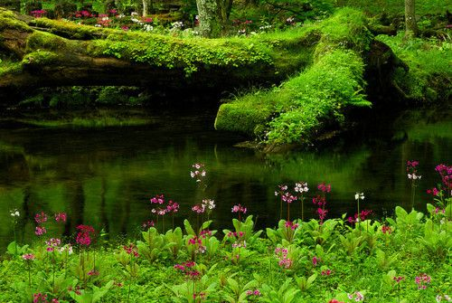 Emerald Pond, Oregon.