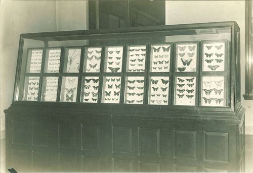 uispeccoll:  iowanaturalhistory:  #Throwback Thursday: Butterfly display in the Museum of Natural History, 1950s. Animation by Laura Streicher, photo from uispeccoll  W-O-W!