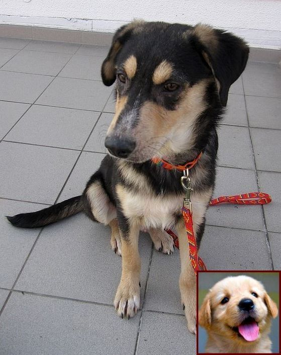 House Training A Puppy In The Rain And Dog Behavior Biting Dog Training Dog Classes Dog Behavior